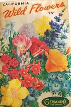 Buy Wildflower Seed Packets in NZ New Zealand.